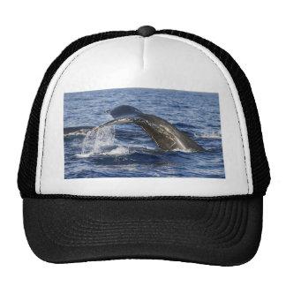 Queue de baleine casquette de camionneur