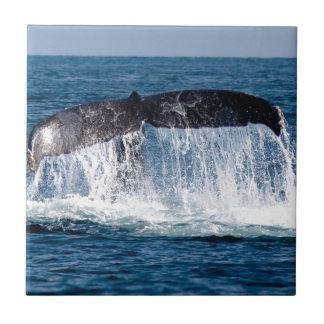 Queue de baleine petit carreau carré