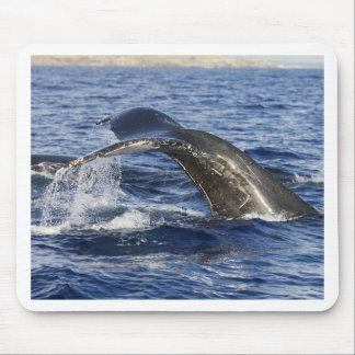 Queue de baleine tapis de souris