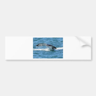 autocollants stickers queue baleine personnalis s. Black Bedroom Furniture Sets. Home Design Ideas