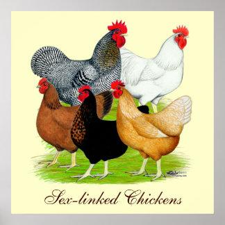 quintette Sexe-lié de poulets Posters