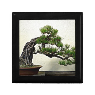 Racine au-dessus d'arbre de bonsaïs de pin de roch petite boîte à bijoux carrée