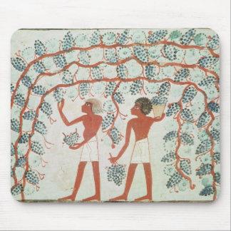 Raisins de cueillette, de la tombe de Nakht Tapis De Souris