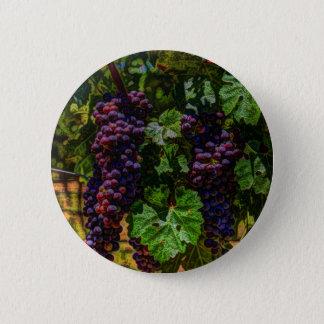 Raisins ensoleillés de vignoble de la Toscane de Badges