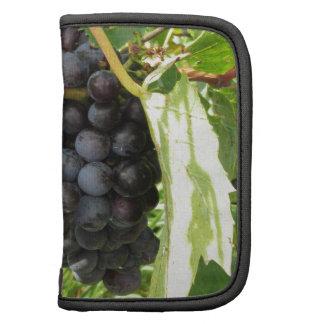 Raisins rouges dans un vignoble agendas