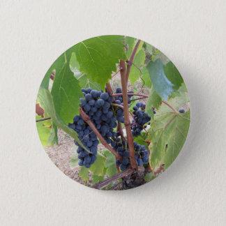 Raisins rouges sur la vigne avec le feuille vert pin's