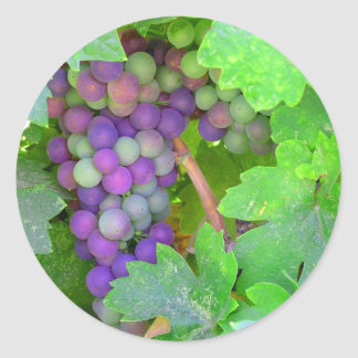 Raisins sur la vigne sticker rond