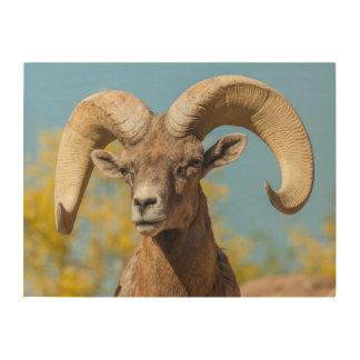RAM de Bighorn de désert Impression Sur Bois