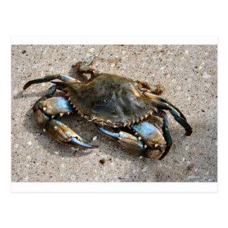 Rampement de crabe bleu carte postale