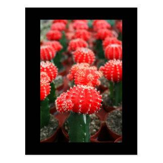Rangée de carte postale de cactus