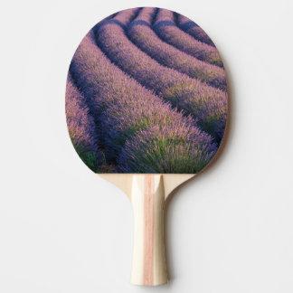 Rangées de lavande en Provence Raquette Tennis De Table