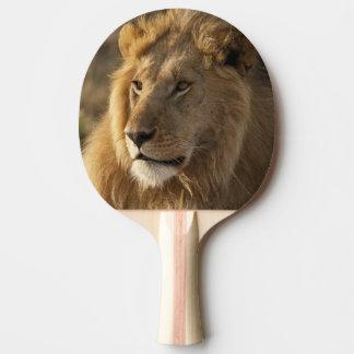 Raquette De Ping Pong Abaissez Mara dans la réservation de jeu de Mara