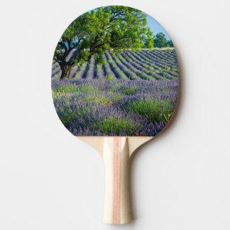 Raquette De Ping Pong Arbre solitaire dans le domaine pourpre de la