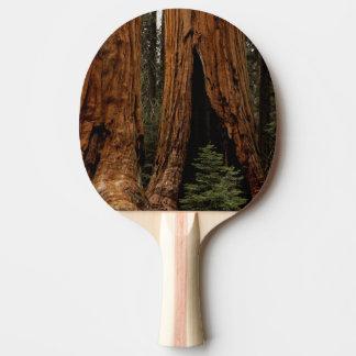 Raquette De Ping Pong Arbres de séquoia, parc national de séquoia