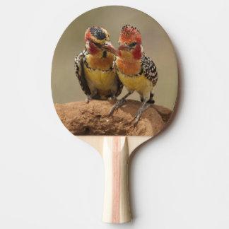 Raquette De Ping Pong Barbet rouge et jaune mangeant des termites