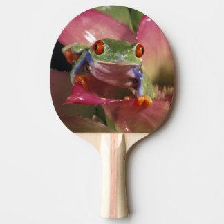 Raquette De Ping Pong Callidryas aux yeux rouges d'Agalychnis de