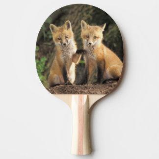 Raquette De Ping Pong Chiot de Fox rouge devant le vulpes de Vulpes de