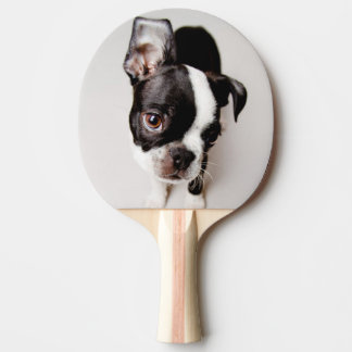 Raquette De Ping Pong Chiot d'Edison Boston Terrier