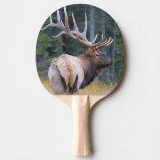 Raquette De Ping Pong Élans de montagne rocheuse de Taureau