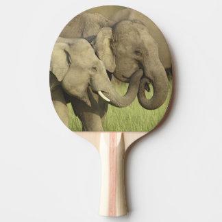 Raquette De Ping Pong Éléphants indiens/asiatiques partageant a