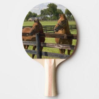 Raquette De Ping Pong Ferme de cheval de pur sang dans le comté de