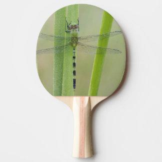 Raquette De Ping Pong Grand Pondhawk, vesiculosa d'Erythemis, adulte
