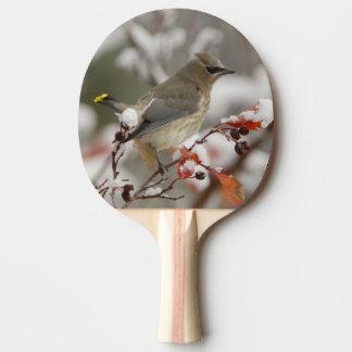 Raquette De Ping Pong Jaseur de cèdre adulte sur l'aubépine avec la