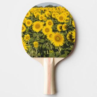 Raquette De Ping Pong La France, Provence, Valensole. Champ de