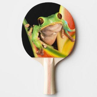 Raquette De Ping Pong L'Amérique du Sud, Equateur, Amazone. Grenouille