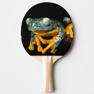 Raquette De Ping Pong L'Amérique du Sud, Equateur, Amazone. Grenouilles