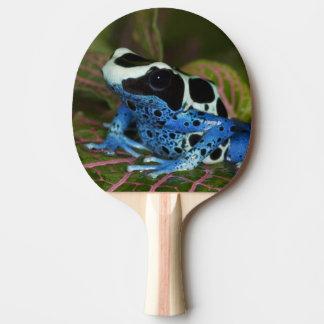 Raquette De Ping Pong L'Amérique du Sud, Surinam. Plan rapproché de