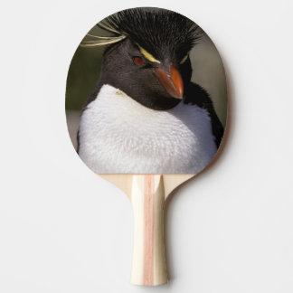 Raquette De Ping Pong L'Antarctique, îles Sous-Antarctiques, sud 5