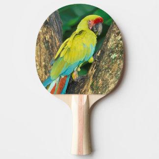 Raquette De Ping Pong Le Costa Rica, arums Ambigua, grand Macaw. vert