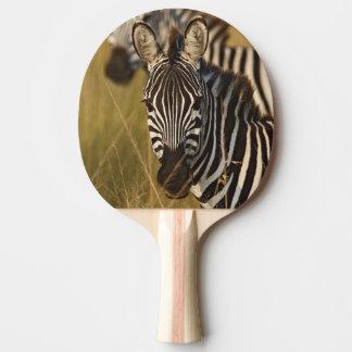 Raquette De Ping Pong Le zèbre de Burchell dans l'herbe grande d'été,