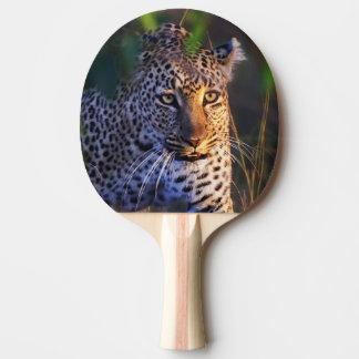 Raquette De Ping Pong Léopard (Panthera Pardus) comme vu dans le masai