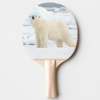 Raquette De Ping Pong Ours blanc adulte à la recherche de nourriture