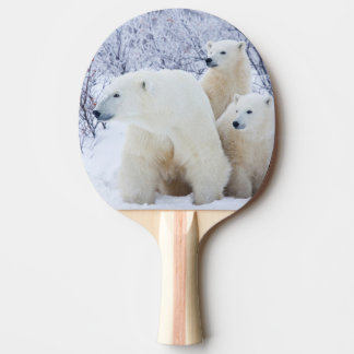 Raquette De Ping Pong Ours blancs et deux petits animaux