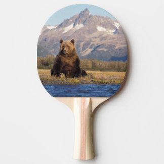 Raquette De Ping Pong ours brun, arctos d'Ursus, ours gris, Ursus