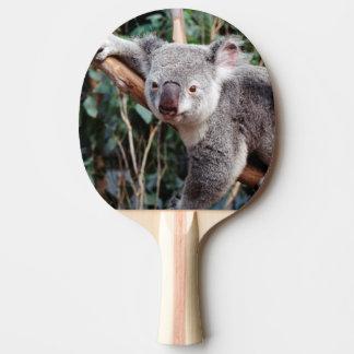 Raquette De Ping Pong Parc de faune de Featherdale, ours de koala