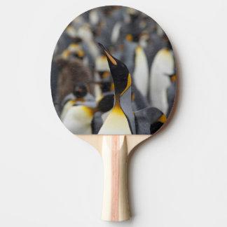 Raquette De Ping Pong Plaine d'île du sud de la Géorgie, Salisbury. En