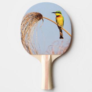 Raquette De Ping Pong Plan rapproché d'un petit oiseau d'abeille-mangeur