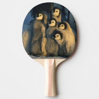 Raquette De Ping Pong Poussins de pingouin d'empereur dans la garderie,
