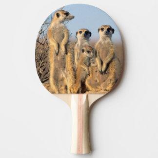 Raquette De Ping Pong Une famille de Suricate s'exposant au soleil à