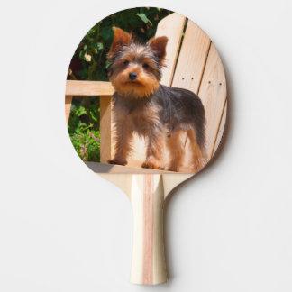 Raquette De Ping Pong Yorkshire Terrier se tenant sur la chaise en bois