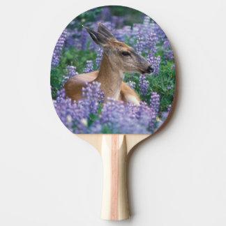 Raquette Tennis De Table Cerfs communs à queue noire, daine se reposant