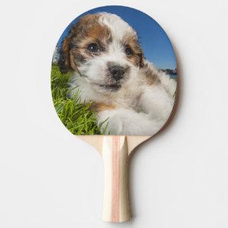 Raquette Tennis De Table Chiot mignon (Shitzu)