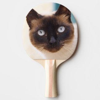 Raquette Tennis De Table Collioure. Le Comté de Roussillon. Un chat de rue.