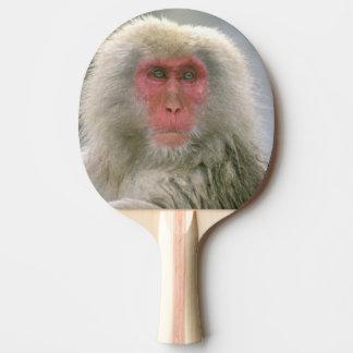 Raquette Tennis De Table Couples de singe de neige, Macaque japonais,