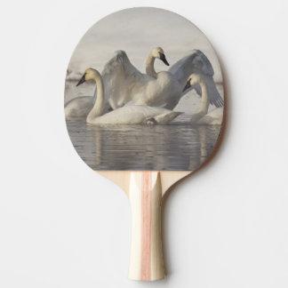 Raquette Tennis De Table Cygnes de trompettiste en rivière de Madison en