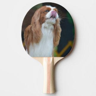 Raquette Tennis De Table Épagneul cavalier doux du Roi Charles